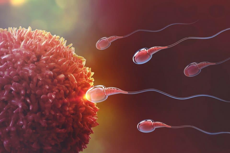 Menstruatiepijn vruchtbaarheid