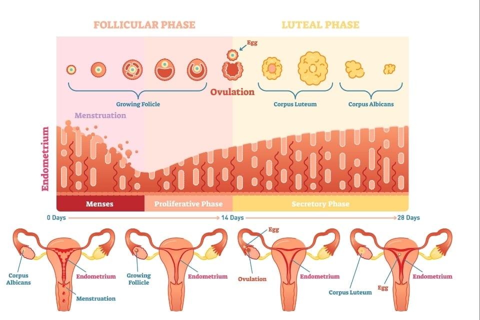 Fysiotherapie en vruchtbaarheid